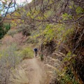 There are several rock walls on the trail.- Mill Creek Pipeline Mountain Bike Trail via Rattlesnake Gluch