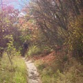 The trees give the impression of riding through a tunnel.- Mill Creek Pipeline Mountain Bike Trail via Rattlesnake Gluch