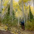 Climbing through aspens.- Desolation Lake Mountain Bike Ride