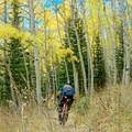Dropping back into the aspens.- Desolation Lake Mountain Bike Ride