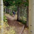 Descending through pines.- Desolation Lake Mountain Bike Ride