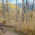 Vistas through the trees.- Desolation Lake Mountain Bike Ride