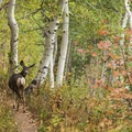 Keep your eyes peeled for abundant wildlife.- Butler Fork Trail Hike
