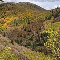 Beautiful fall colors in the Wasatch.- Butler Fork Trail Hike