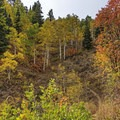 Fall in the Wasatch from the Butler Fork Trail.- Butler Fork Trail Hike