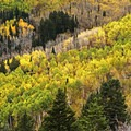 Stunning display of autumn color below Mount Raymond.- Butler Fork Trail Hike