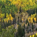 Mill A Basin and Big Cottonwood Canyon in general are simply stunning in the fall.- Butler Fork Trail Hike