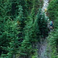 The trail back is mostly downhill with a few uphill sections.- Mount Seymour Summit Hike