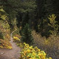 The early part of the trail.- Butler Fork Trail Hike