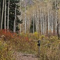 The fork in the trail: left goes to Mill A Basin and right goes to Dog Lake.- Butler Fork Trail Hike