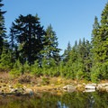 The trail passes a few ponds.- Mount Seymour Summit Hike