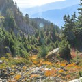 Fall colors in the alpine.- Mount Seymour Summit Hike