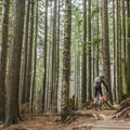 The top of the trail is often wet and in the clouds.- Mount Seymour Trails: CBC