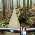 The Millennium Log.- Mount Seymour Trails: CBC