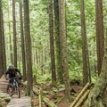 There is a long section of the trail that is elevated.- Mount Seymour Trails: CBC