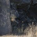 Salvaged petroglyphs at Columbia Hills Historical State Park.- Columbia Hills Historical State Park