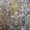 Unidentified flower species (help us identify it by providing feedback).- Horsethief Butte Hike + Rock Climbing Area