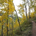 Ascending through aspen in the fall. - Cathedral Lake Trail