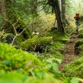 The forest is lush and wet near the lake.- Elsay Lake Hiking Trail