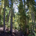 Trail leading through the Willamette National Forest.- Sawtooth Mountain + Indigo Lake Hike