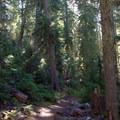 Trail leading up to Sawtooth Mountain.- Sawtooth Mountain + Indigo Lake Hike