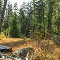 The flats near the lake are very wet.- Elsay Lake Hiking Trail