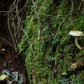Unidentified species (help us identify it by providing feedback).- Elsay Lake Hiking Trail
