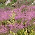 There is an abundance of wildflowers in Long Canyon.- Lake Anna via Long Canyon