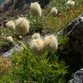 "Wildflowers resembling trees from ""The Lorax.""- Lake Anna via Long Canyon"