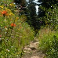 Parts of the trail are lined with wildflowers.- Lake Anna via Long Canyon