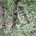 A monkey playing around on Sugarloaf Mountain. - Sugarloaf Mountain