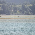 Clammers on Netarts Bay in the distance.- Netarts Bay Landing