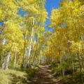 Ascending Strand Hill through aspens in the fall.- Strand Hill Mountain Bike Ride