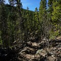 Descending switchbacks.- Rich Creek + Rough and Tumbling Creek Hiking Loop
