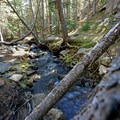 Rough and Tumbling Creek. - Rich Creek + Rough and Tumbling Creek Hiking Loop