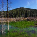 Pond along the trail.- Rich Creek + Rough and Tumbling Creek Hiking Loop
