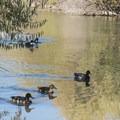 A few of the locals. - Jordan River Parkway Road Cycling