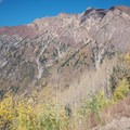 Into an aspen grove on Snowbird's Big Mountain Trail.- Big Mountain Trail Mountain Bike Ride