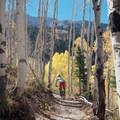 Descending through the aspens.- Big Mountain Trail Mountain Bike Ride