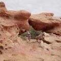 Riding Gooseberry Mesa.- Gooseberry Mesa Mountain Biking: South Rim, Hidden Canyon + White Trail