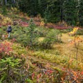 Vibrant fall colors nearing the treeline.- Brew Lake Hike to Brew Hut