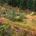 Vibrant fall colors nearing the treeline.- Brew Lake Hike to Brew Hut