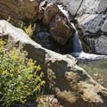 Wildflowers and waterfalls, not a bad combo.- Stairs Gulch Hike