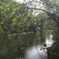 Alligator Hole along Big Chico Creek.- Upper Bidwell Park