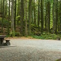 Some sites back onto the forest.- Gold Creek Campground