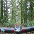 Menzies Trail, Golden Ears Provincial Park.- Menzies Trail Mountain Bike Ride