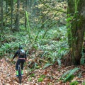 The trail is completely covered in leaves in the fall. - Menzies Trail Mountain Bike Ride