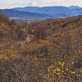 Views from the Dutch Hollow Trail System in Wasatch Mountain State Park.- Dutch Hollow Trail System Mountain Biking