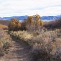 The Dutch Hollow Trail System in Wasatch Mountain State Park.- Dutch Hollow Trail System Mountain Biking