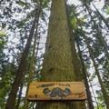 Giant Killer.- Woodlot Mountain Bike Trails: Blood Donor, Giant Killer + Hoots